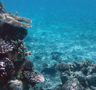 A reef underwater