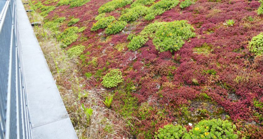 commercial green roof installation